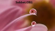 çiçek su aşkı